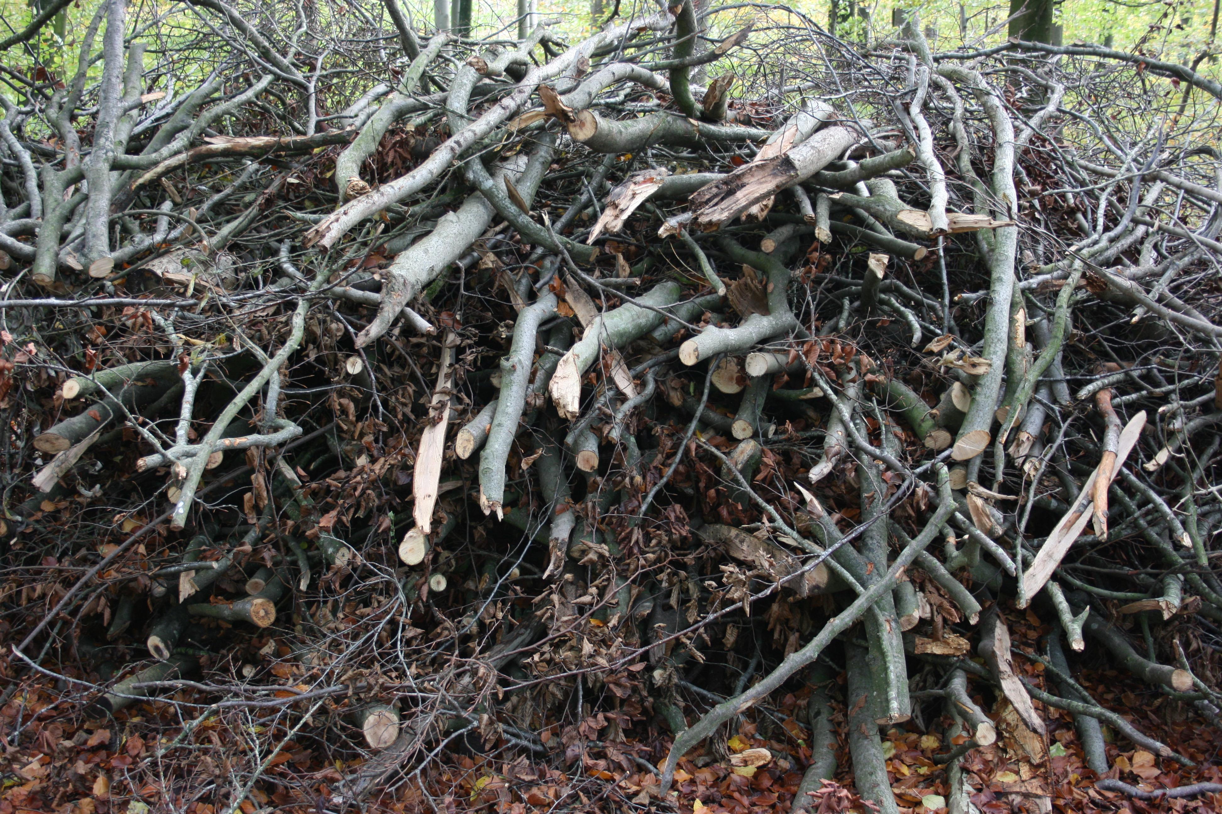 Træ svampe tilbud